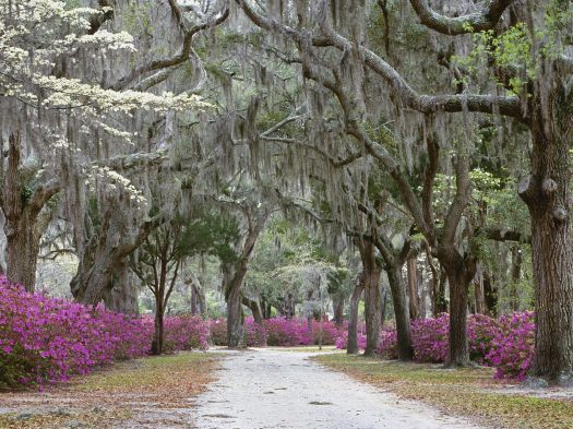Springtime in Savannah, Georgia