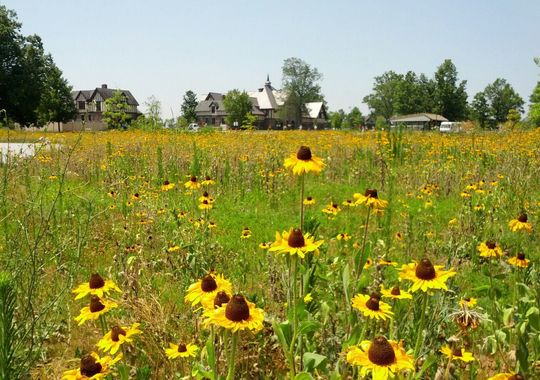 At Duke Farms in Hillsborough, fields around the Farm Barn teem with colorful wildflowers and butterflies.