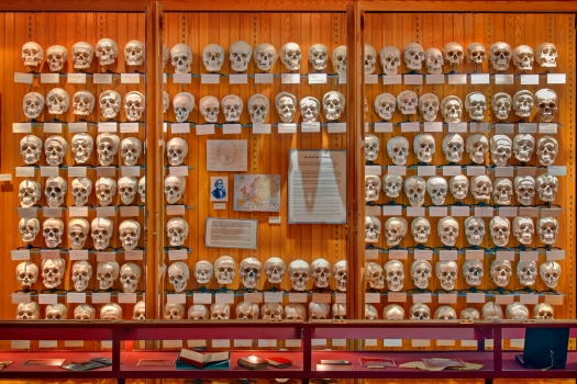 Photo courtesy of MutterMuseum.org
