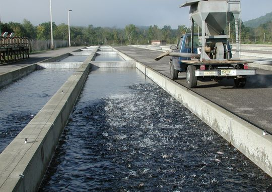 Juvenile trout are raised in the raceways at the Pequest Trout Hatchery before being stocked into N.J. bodies of water. (Courtesy of the Pequest Trout Hatchery)
