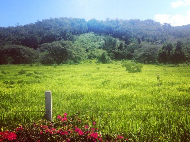 Jamaica is known for its lush greenery. (Photography Jenna Intersimone)
