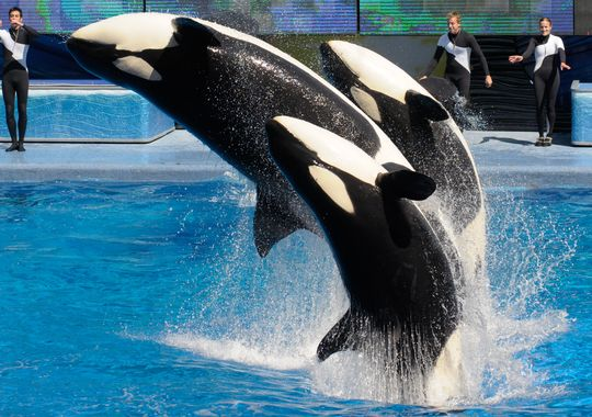 SeaWorld recently visited the Association of Home-Based Travel Agents to give a seminar on what they can offer to clients. (Photo: Gannett NJ File Photo)