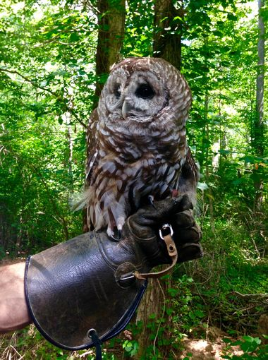 The Raptor Trust provides the chance to see almost all of the New Jersey native raptor species on display in one place. Jenna Intersimone/Staff Photo
