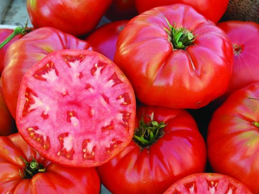 New Jersey is known for its great tomatoes. (Photo: File photo)