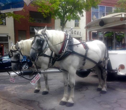 Horse-drawn carriages in Wilmington. Photo by Jenna Intersimone